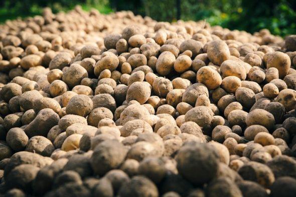 Операция коп картошки